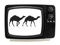 2 Camels Broadcast